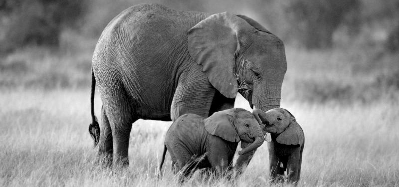 Dónde quedó mi Elefante