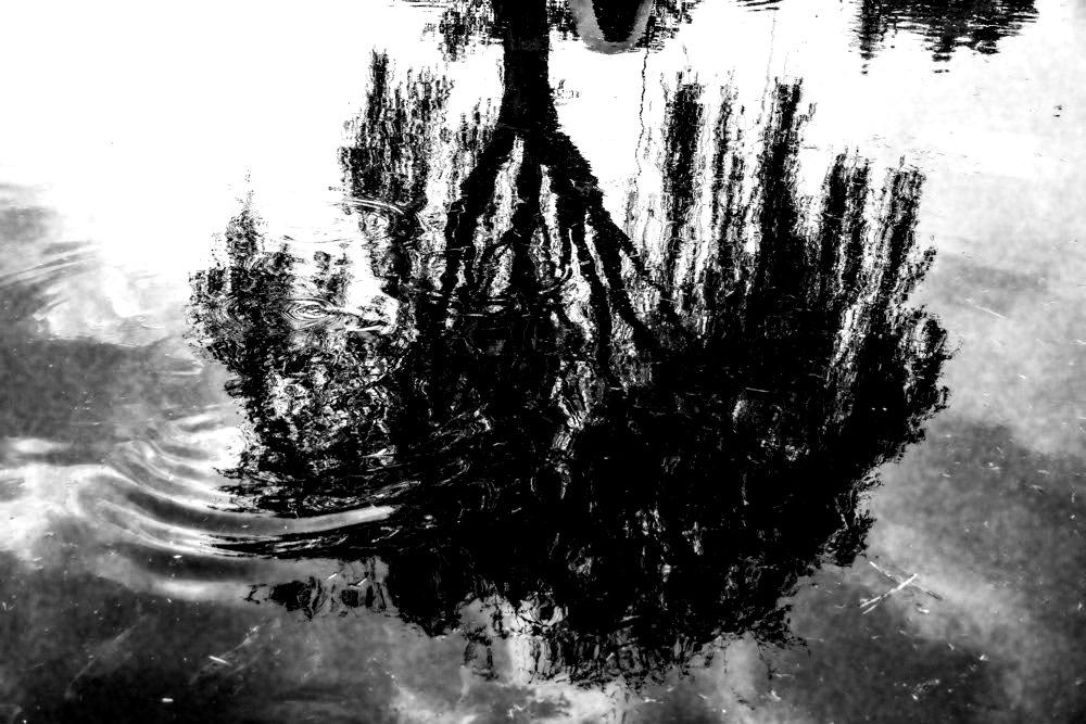 Árbol adentro, cultivando la paz interna