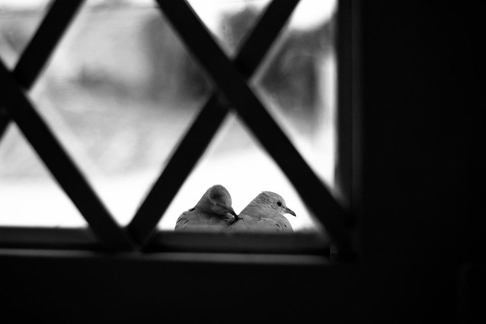Melodías de ocio y una ventana con plumas