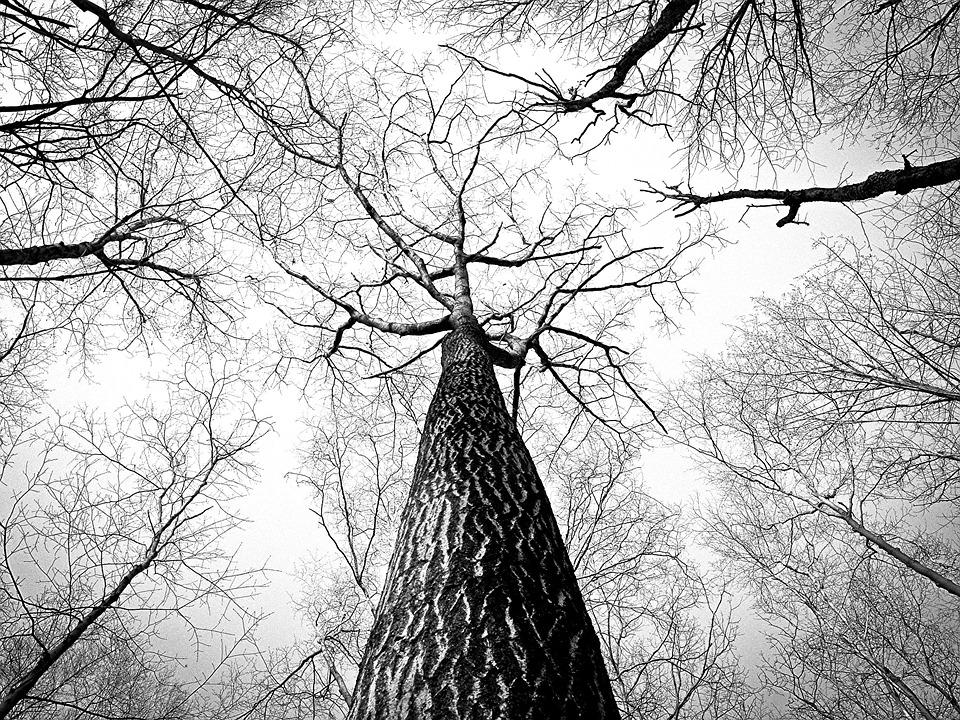 Bosque de dudas
