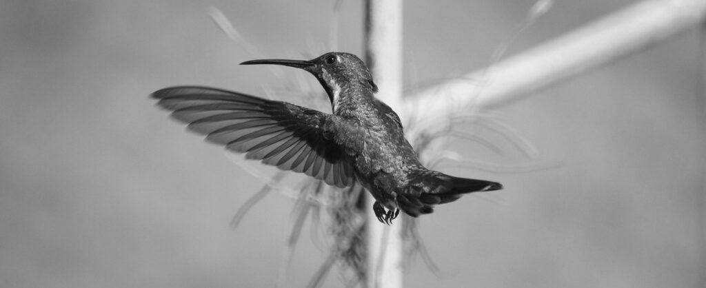 Hay un colibrí en mi hogar