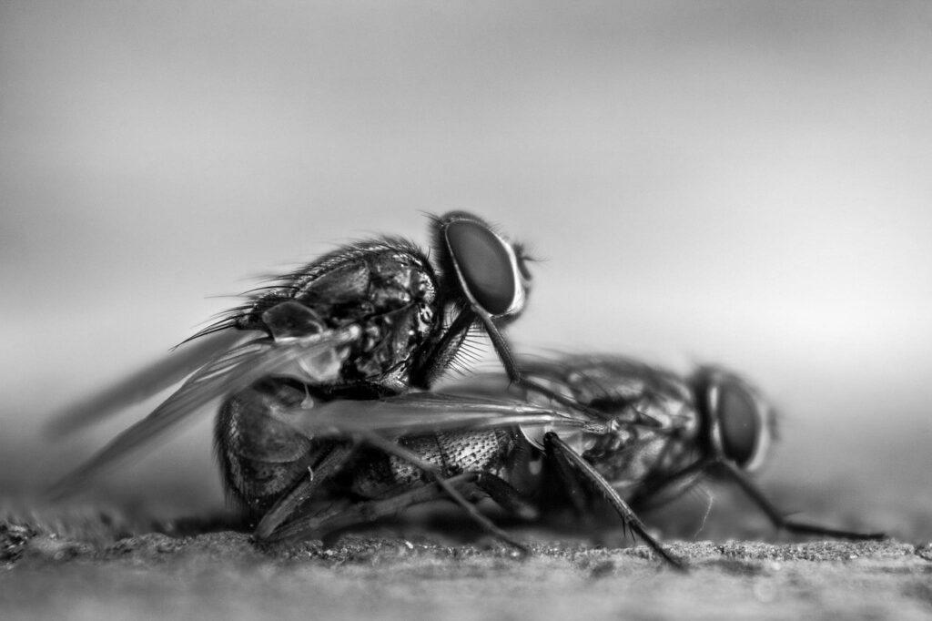 Estadio de las moscas